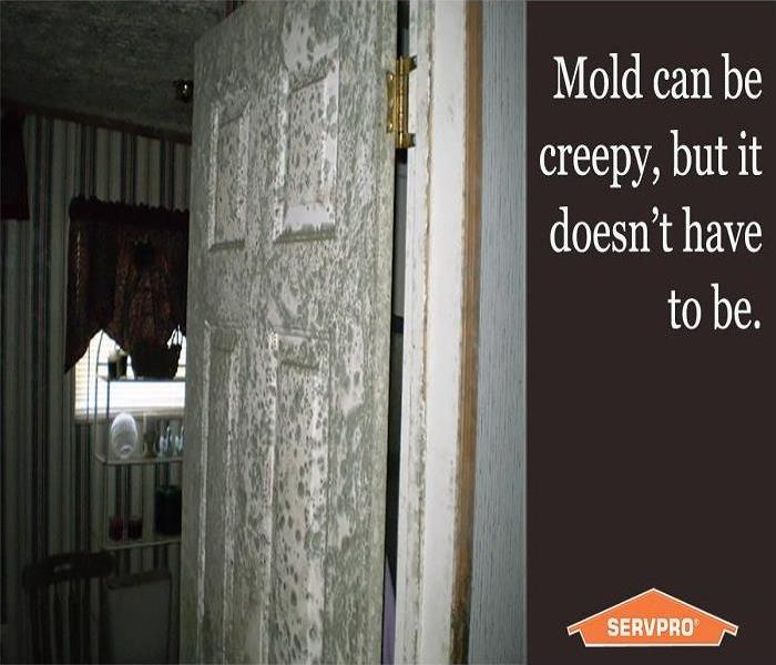 Mold Remediation Trained & Certified Technicians With the Proper Equipment