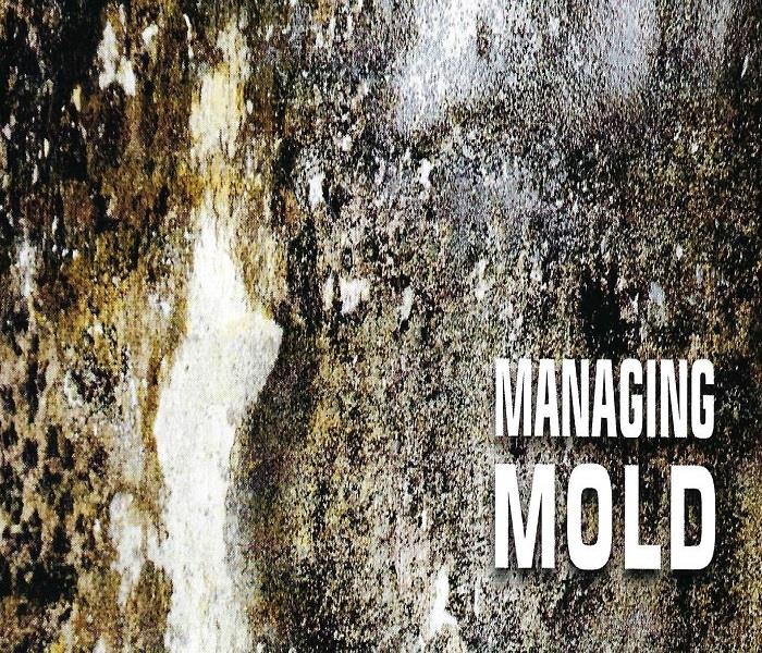 Mold Remediation All the Training, Experience, and Equipment You Need